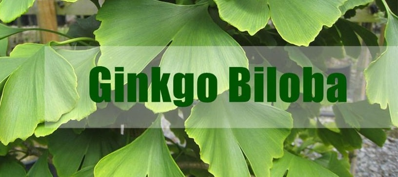 Ginkgo Biloba Extract – CP2010